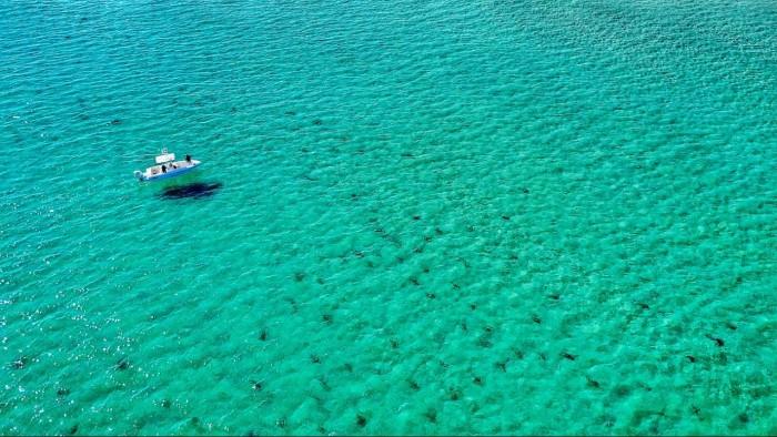 Droneによるフロリダ州サメの移動!!!